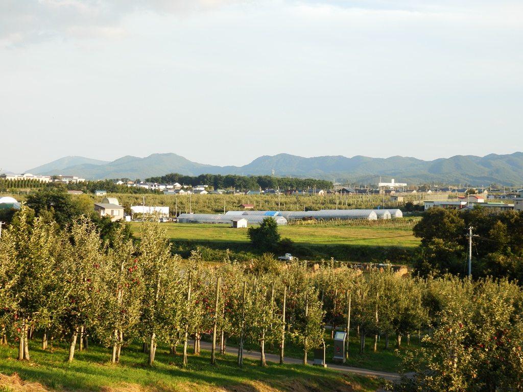 Apple City Hirosaki pic11