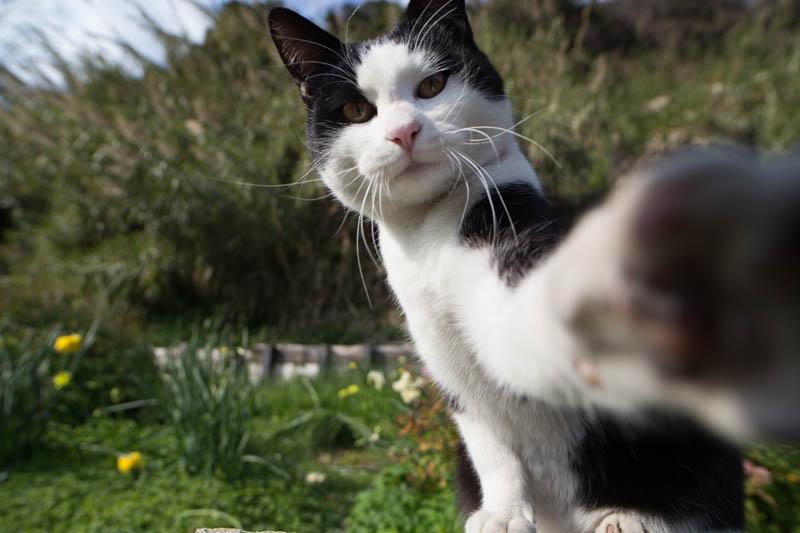 selfie de chat