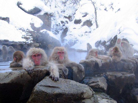 7-jigokudani-monkey-park
