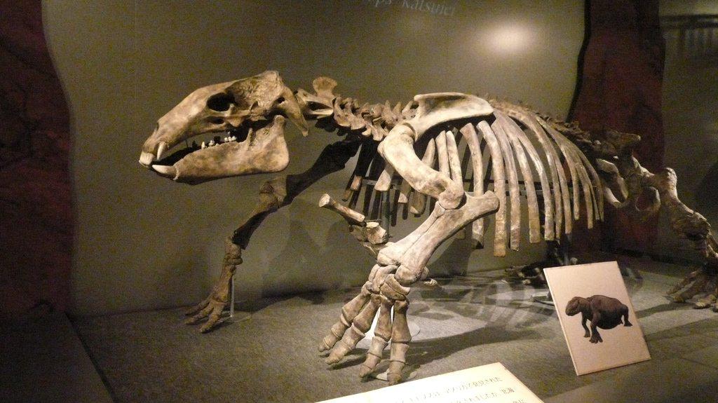 dinosauresueno0