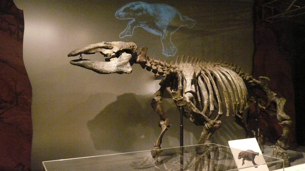dinosauresueno1