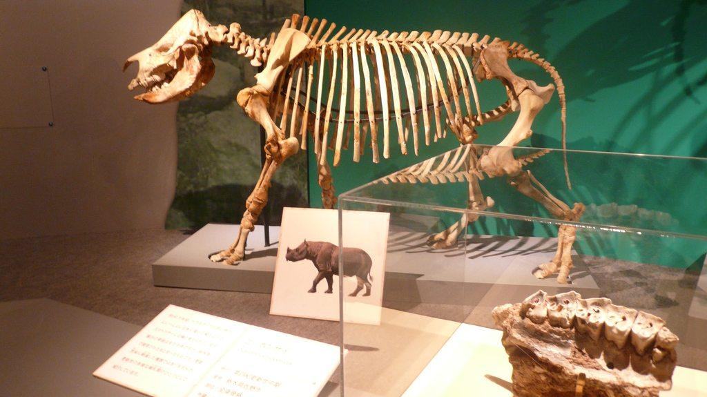 dinosauresueno12