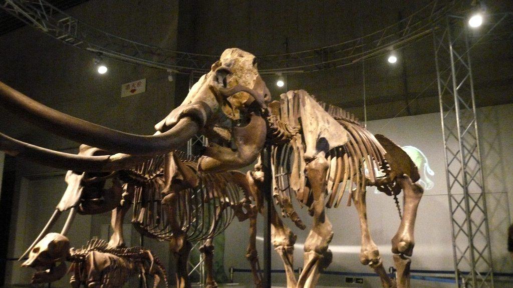 dinosauresueno7
