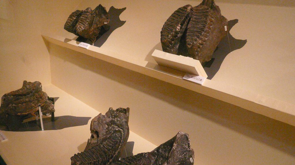L'exposition commence par nous présenter le monde du petit : végétaux et petits mammifères.