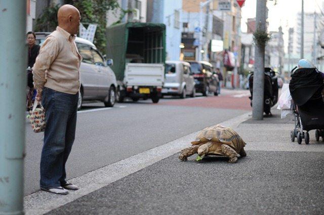 TurtleWalk-2_thumb[5]