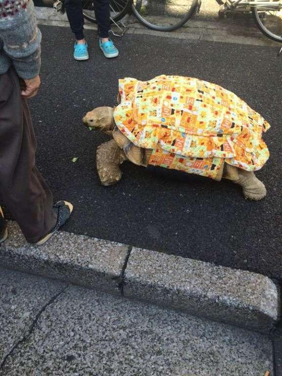 tortue géante tsukishima tokyo
