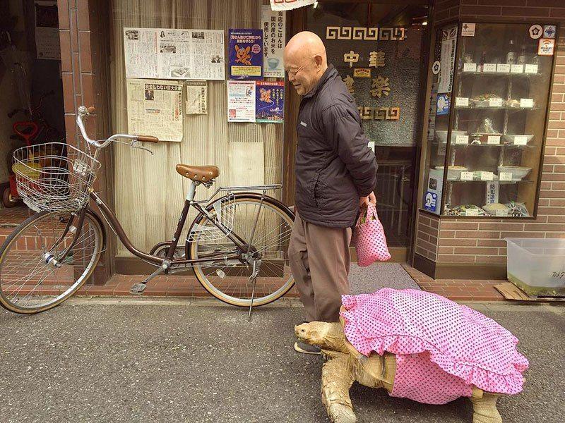 mitani-hisao-wakls-his-tortoise-around-tokyo-2