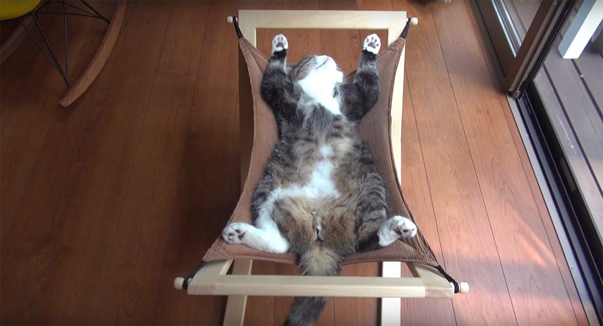 le chat maru fait sa sieste dans un hamac de la meilleure. Black Bedroom Furniture Sets. Home Design Ideas