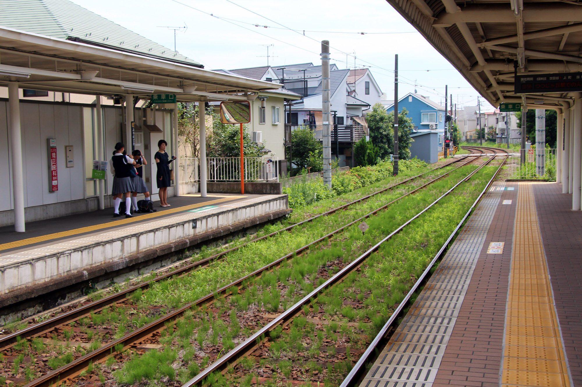 Gotokuji-Tokyo42
