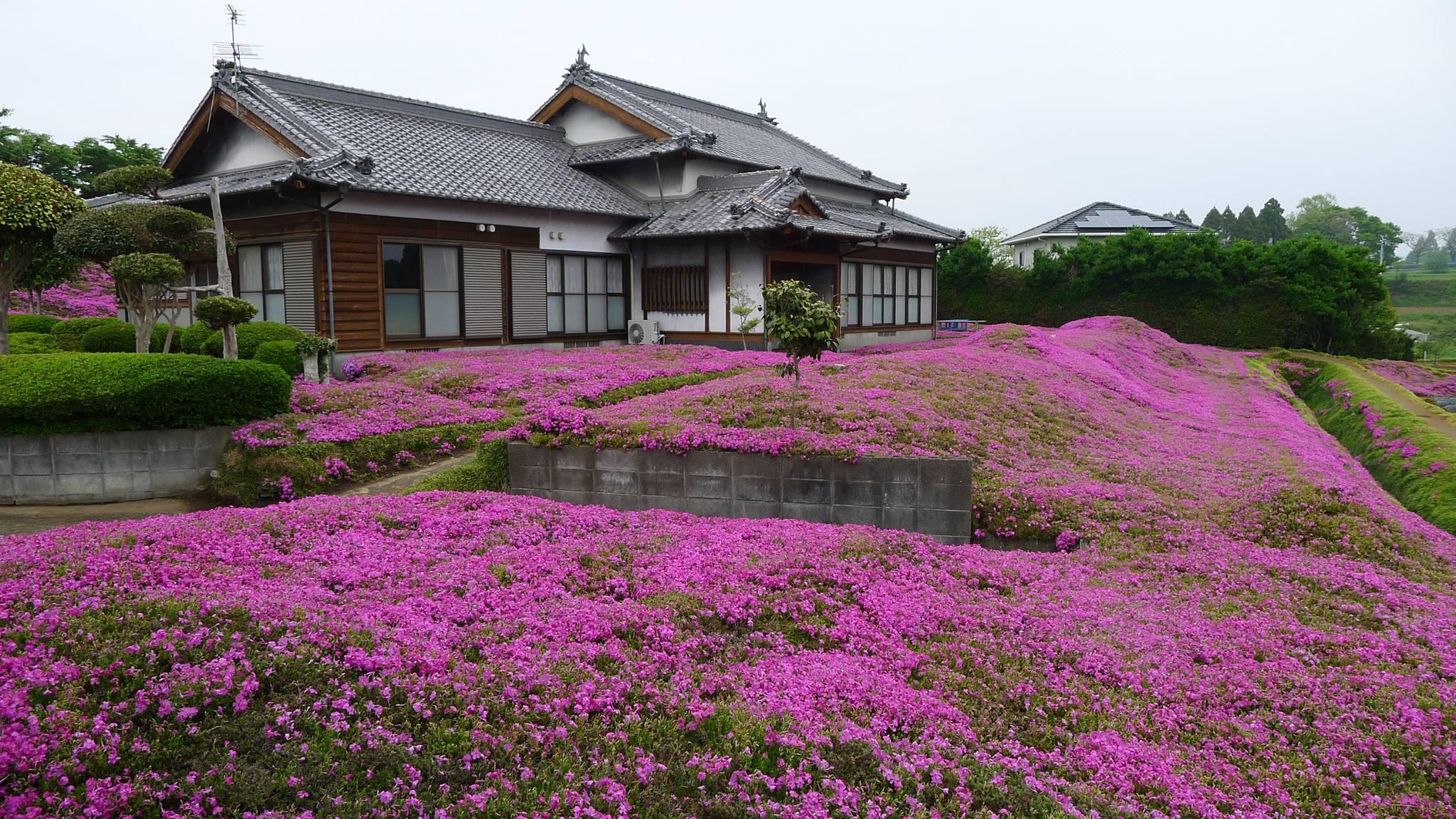 Un Japonais crée un grand jardin de fleurs odorantes pour ...