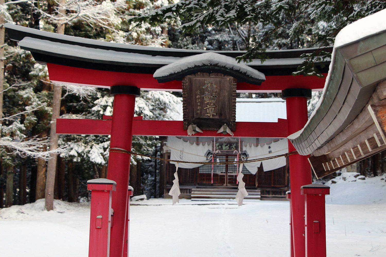 Nagano singes neige snow monkey_10