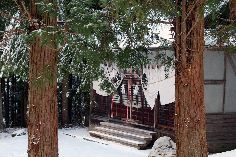 Nagano singes neige snow monkey_11