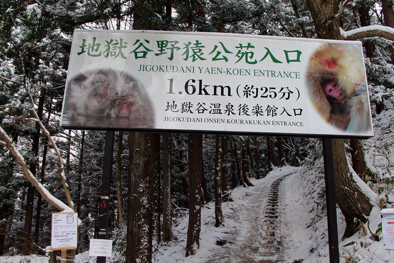 Nagano singes neige snow monkey_12