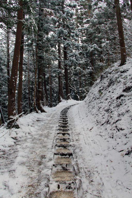 Nagano singes neige snow monkey_13