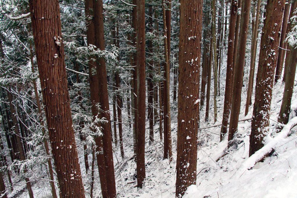 Nagano singes neige snow monkey_14