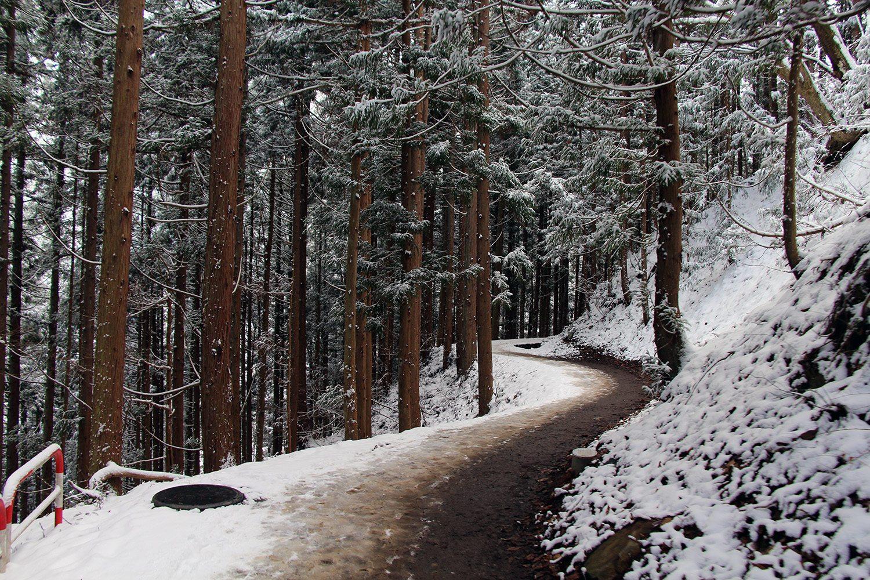 Nagano singes neige snow monkey_15
