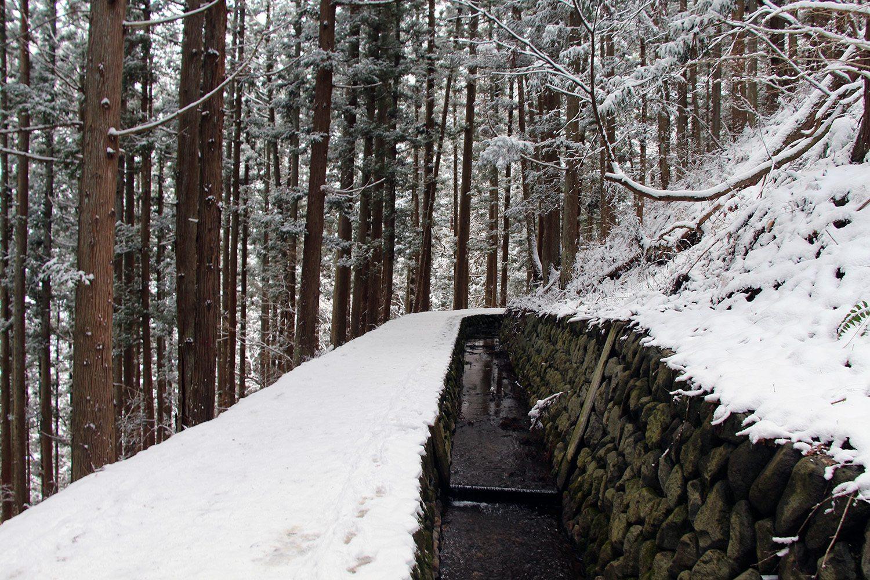 Nagano singes neige snow monkey_16
