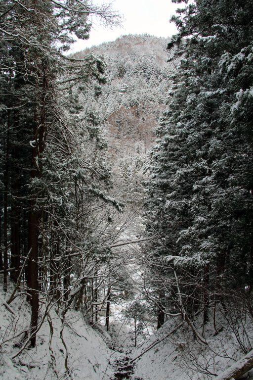 Nagano singes neige snow monkey_17