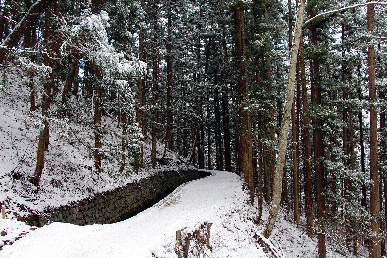 Nagano singes neige snow monkey_18