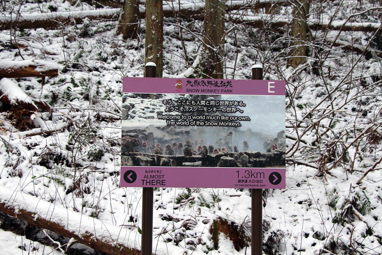 Nagano singes neige snow monkey_19