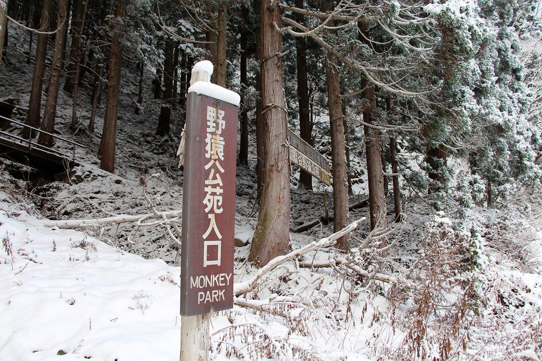 Nagano singes neige snow monkey_23