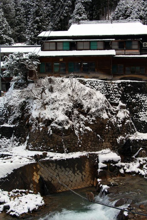 Nagano singes neige snow monkey_24