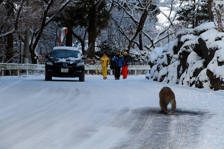 Nagano singes neige snow monkey_3