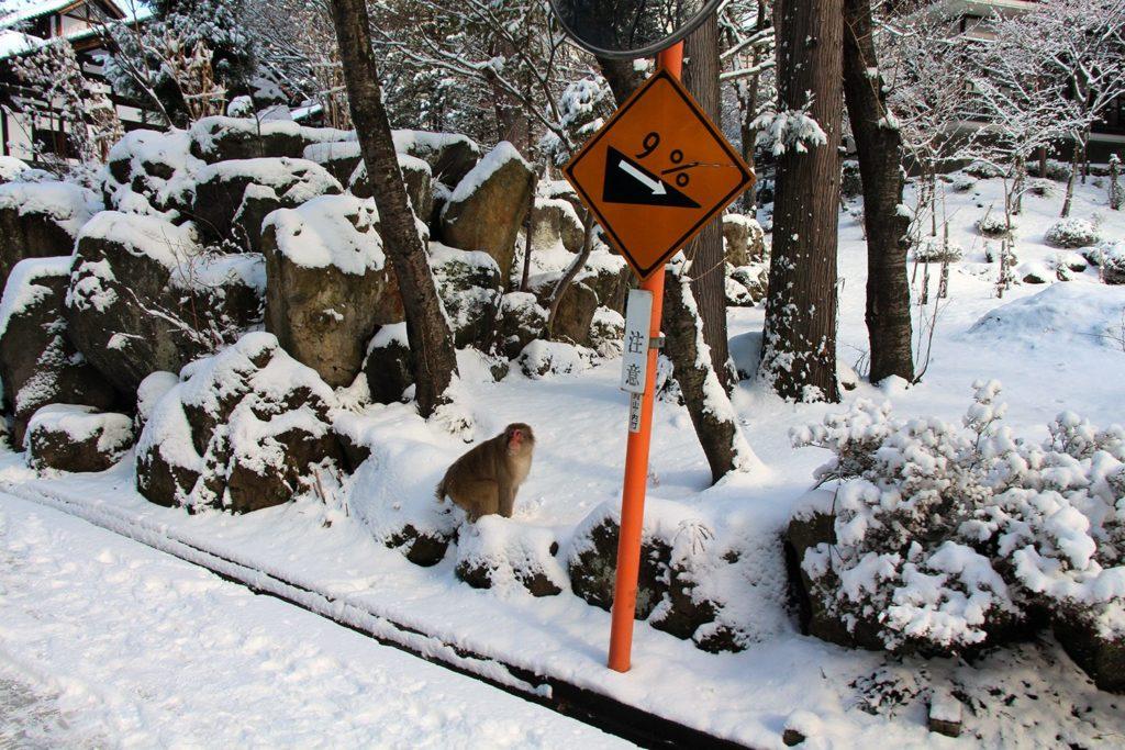 Nagano singes neige snow monkey_4