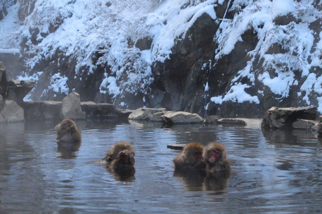 Nagano singes neige snow monkey_41