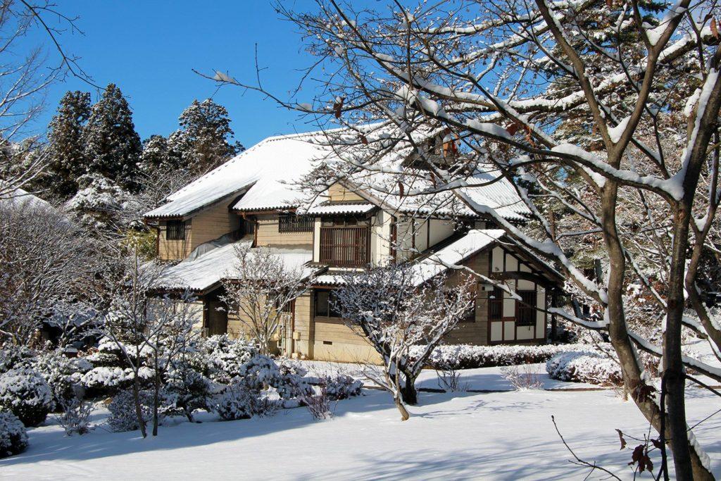 Nagano singes neige snow monkey_54