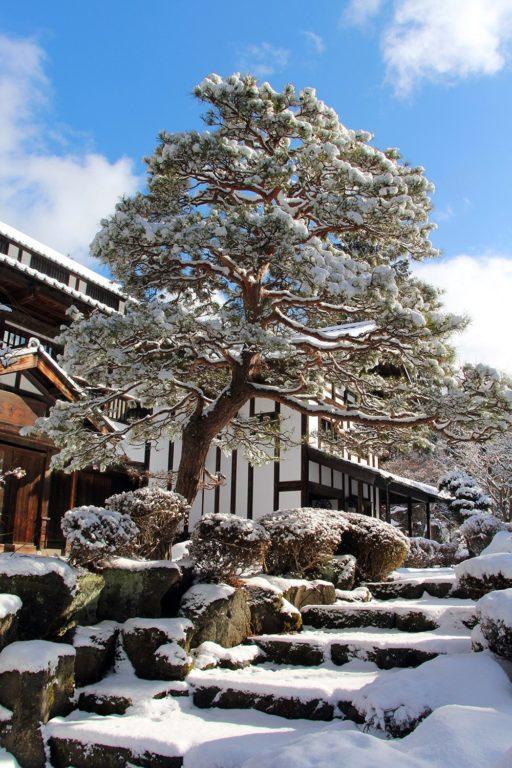 Nagano singes neige snow monkey_56