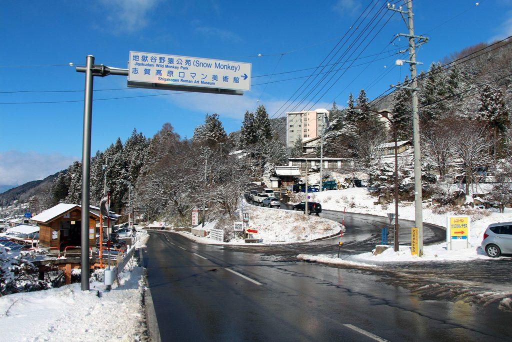 Nagano singes neige snow monkey_59