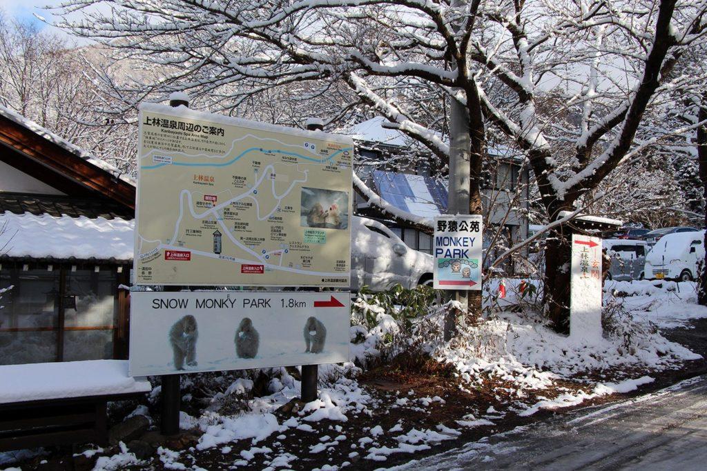 Nagano singes neige snow monkey_6