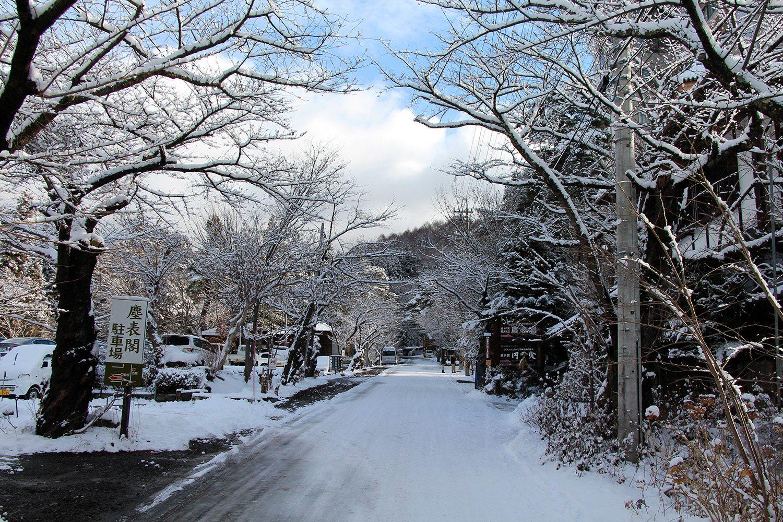 Nagano singes neige snow monkey_7