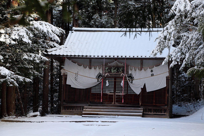 Nagano singes neige snow monkey_9