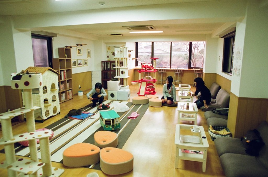 Nekokaigi,_a_cat_cafe_in_Kyoto_-_March_16,_2010