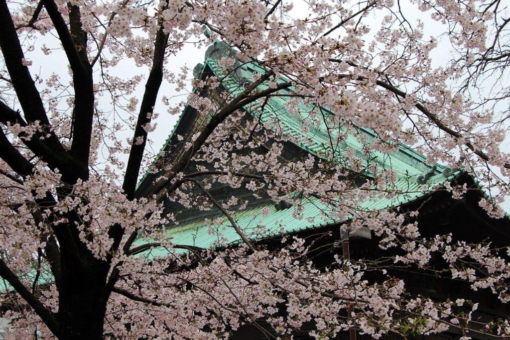 Gokokuji Tokyo Sakura 2016_10