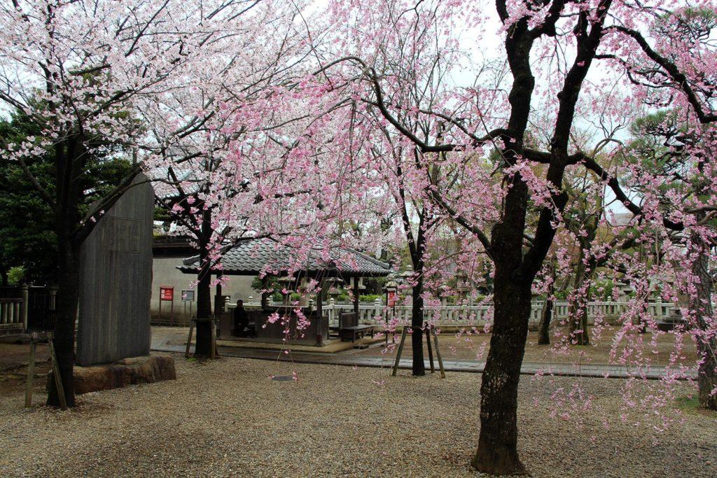 Gokokuji Tokyo Sakura 2016_4