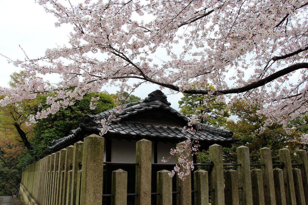 Gokokuji Tokyo Sakura 2016_8