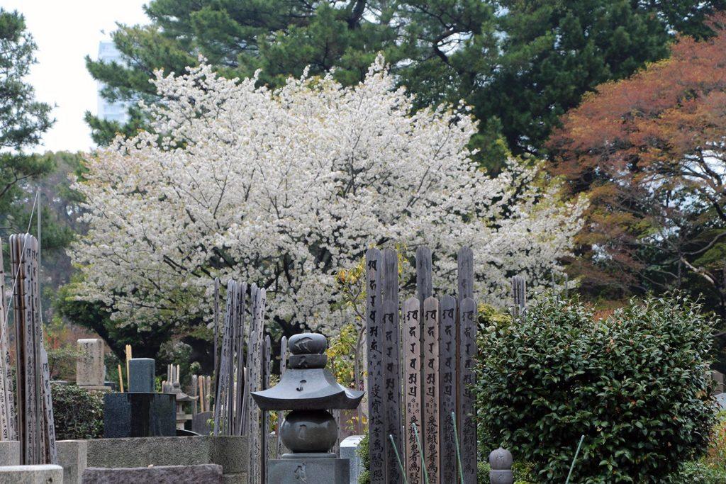 Gokokuji Tokyo Sakura 2016_9