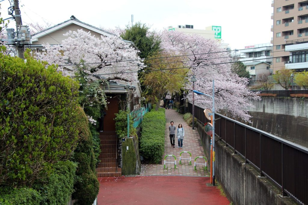 Sakura Tokyo 2016_10