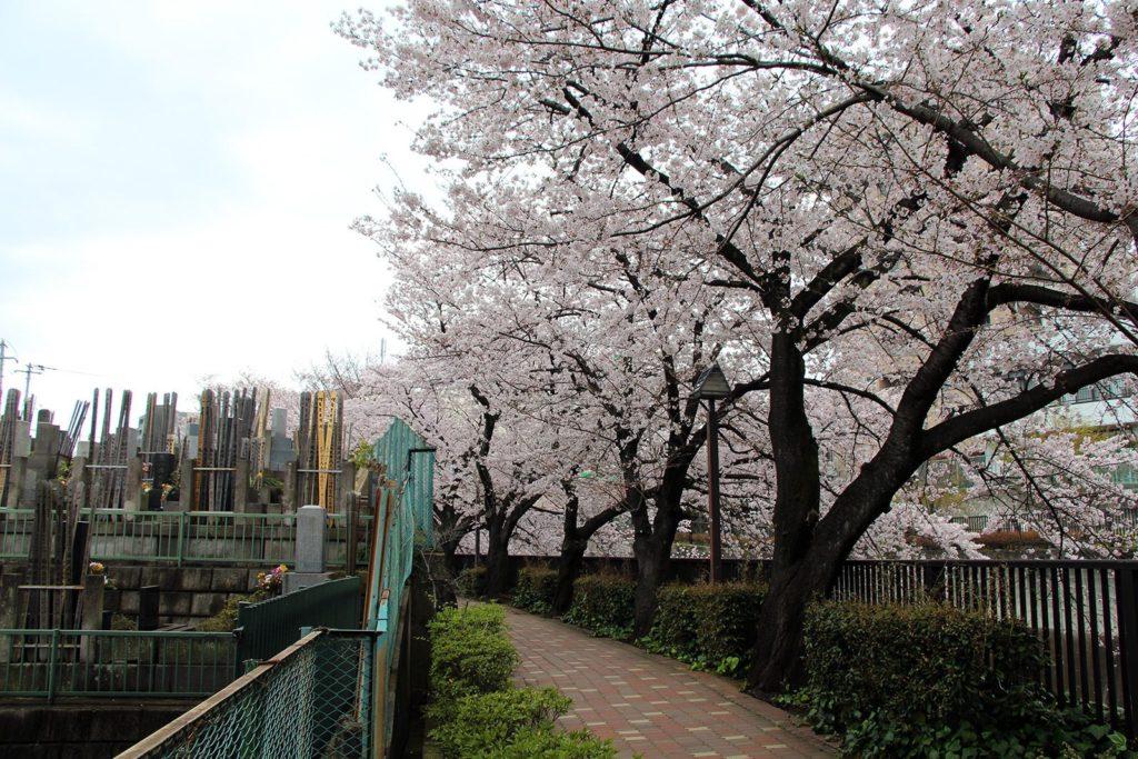 Sakura Tokyo 2016_11