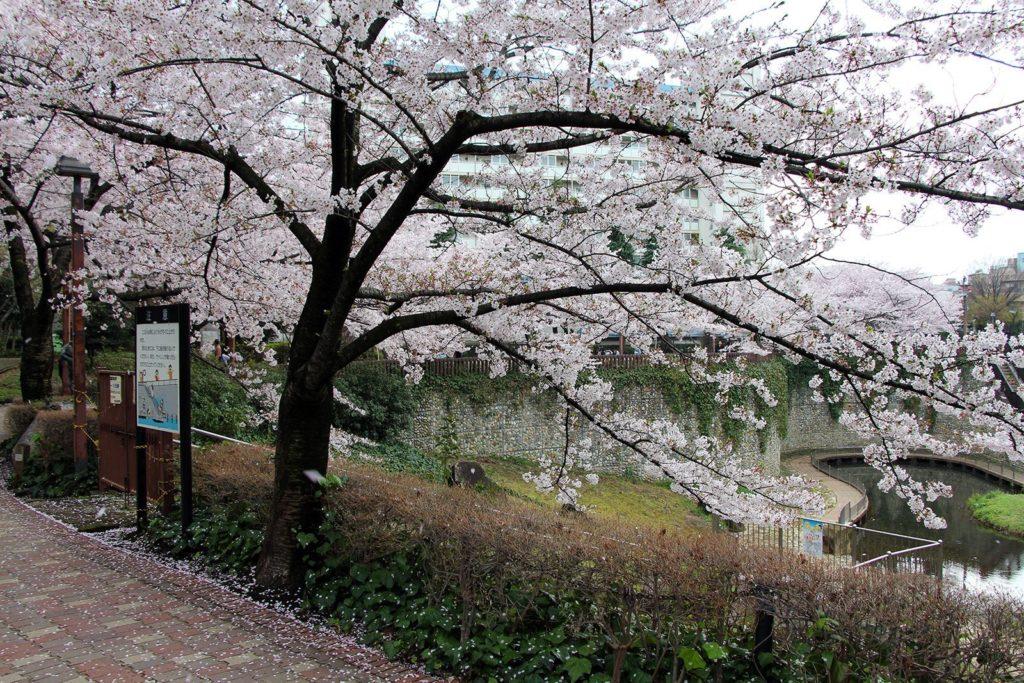 Sakura Tokyo 2016_13