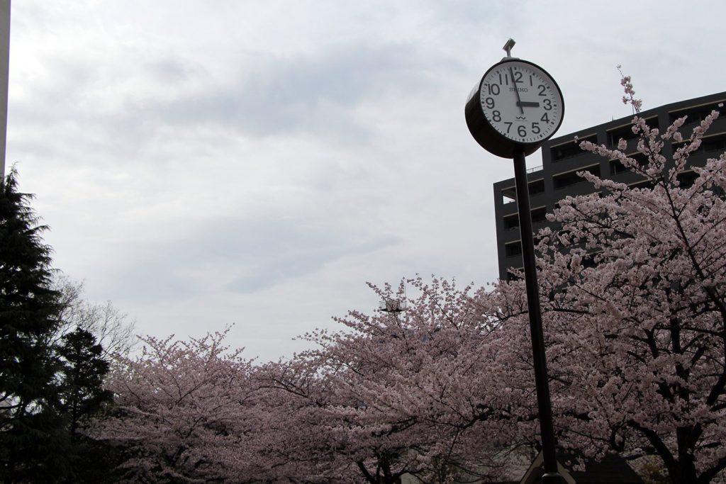 Sakura Tokyo 2016_14