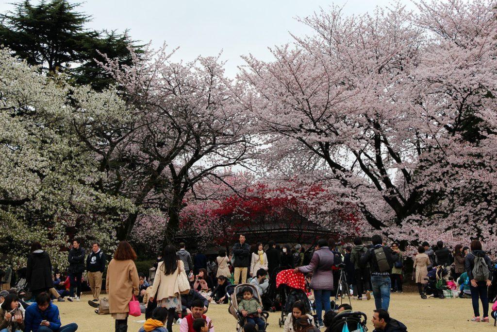 Sakura Tokyo 2016_17