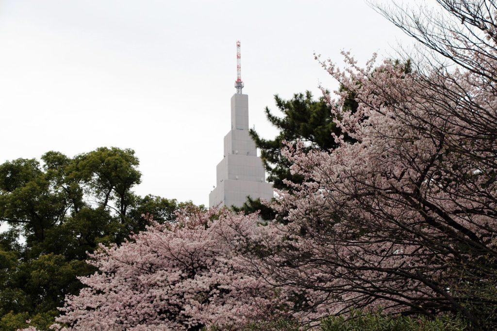 Sakura Tokyo 2016_19