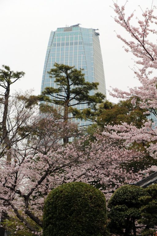 Sakura Tokyo 2016_2