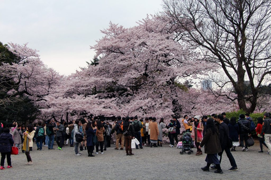 Sakura Tokyo 2016_23