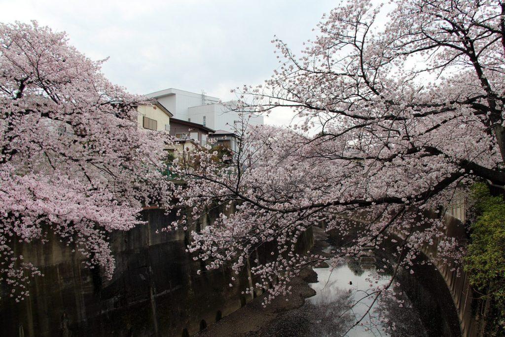 Sakura Tokyo 2016_26