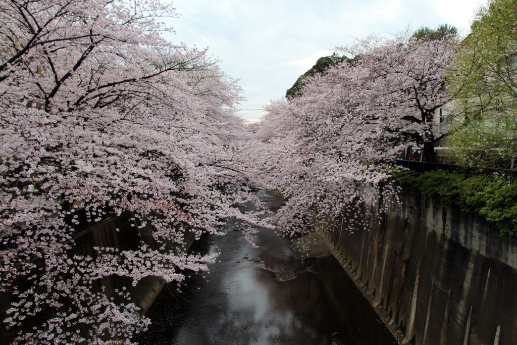 Sakura Tokyo 2016_28